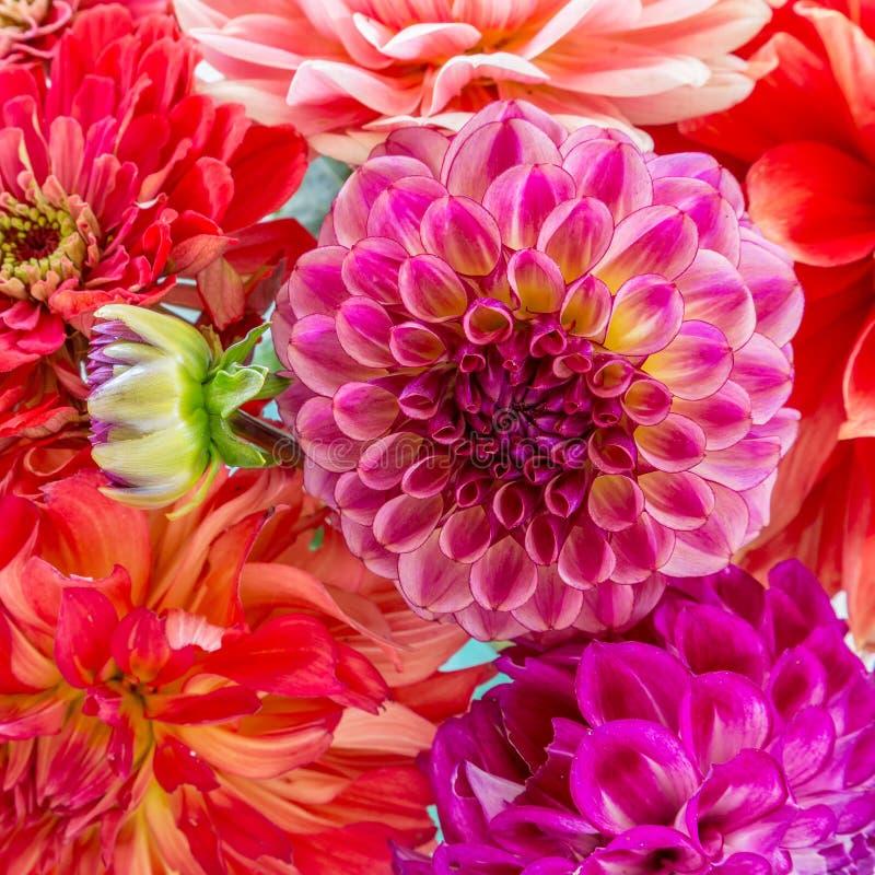 Dahlia Bouquet photographie stock