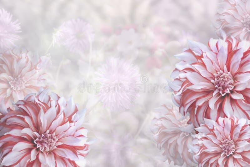 Dahlia With Copy Space royaltyfria foton