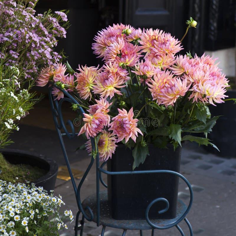 Download Dahlia Flower colorée photo stock. Image du beau, noir - 45360010