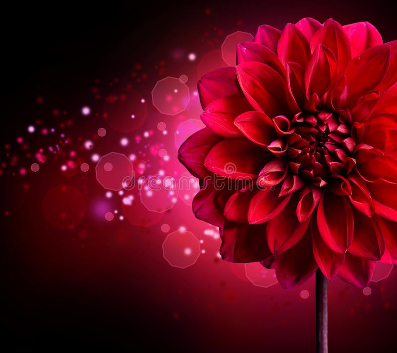 Dahlia flower design stock illustration