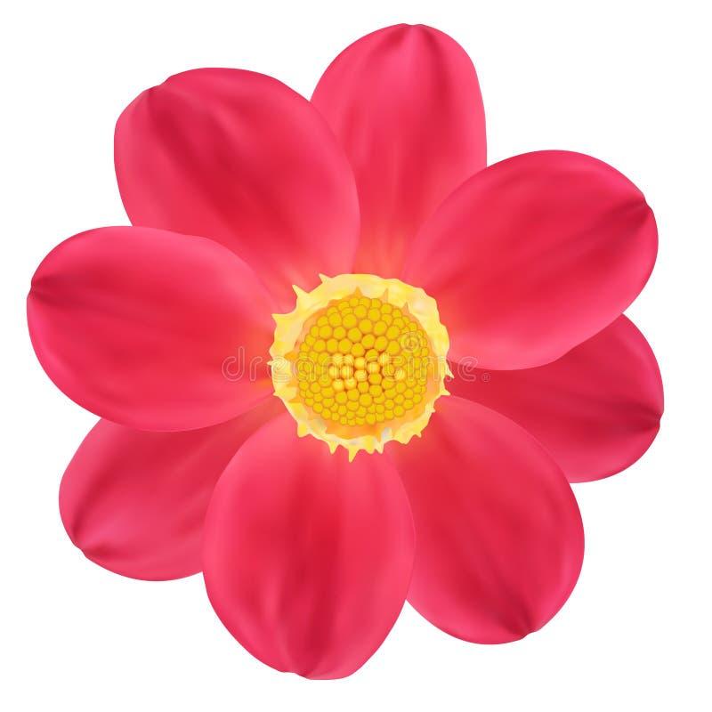 Dahlia Flower rouge. illustration de vecteur