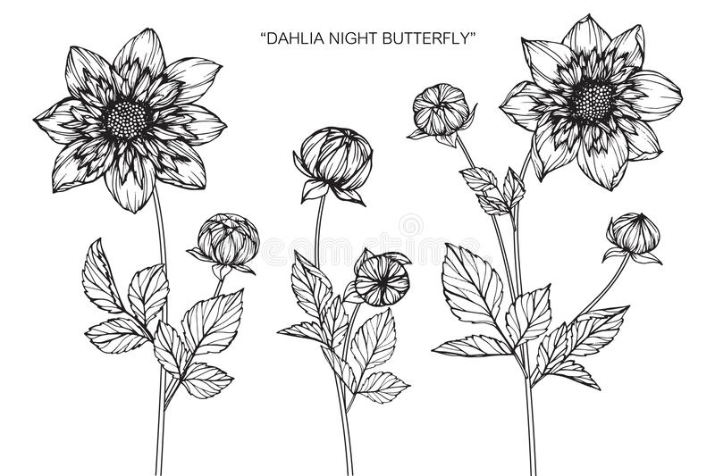 Dahlia flowers drawing and sketch stock de ilustración