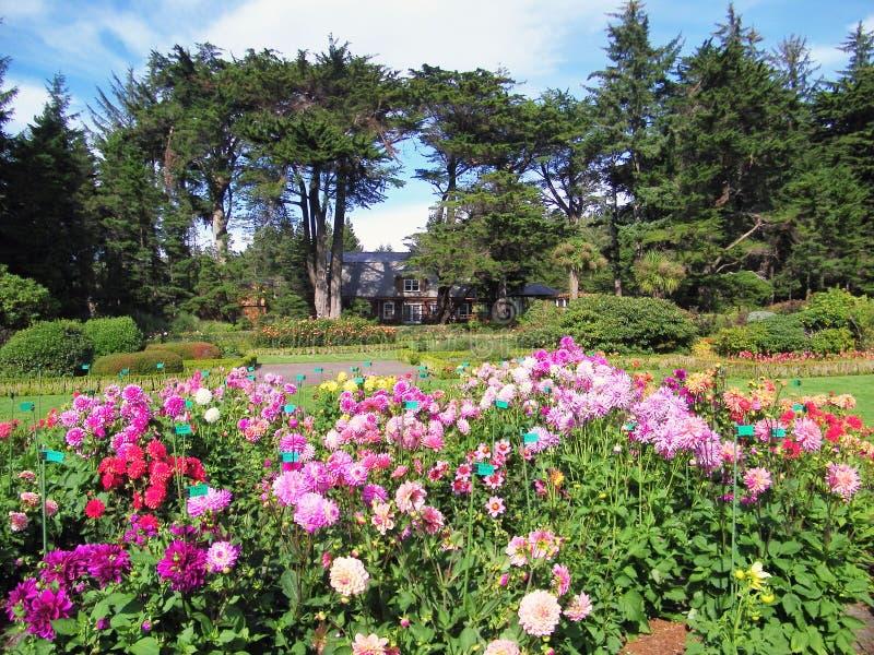 Dahlia garden royalty free stock photos