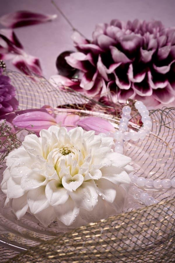 Dahlia lilas photographie stock libre de droits