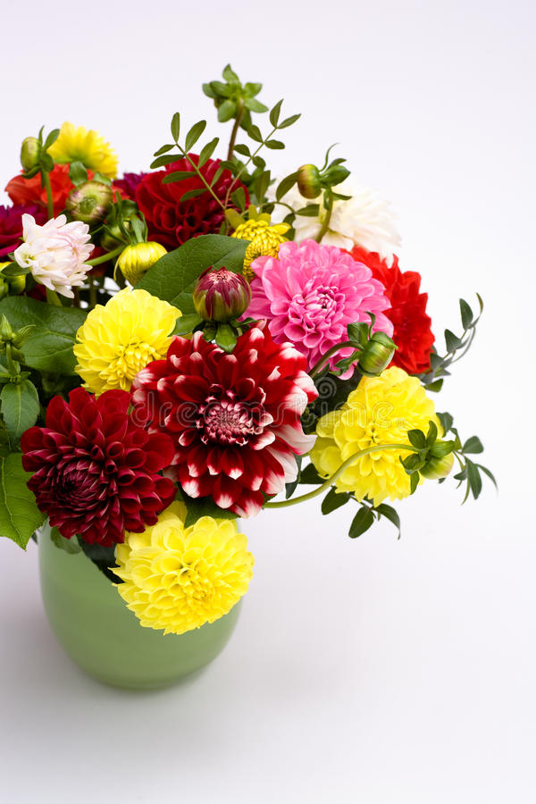 Download Dahlias bunch stock photo. Image of plant, freshness - 11363632
