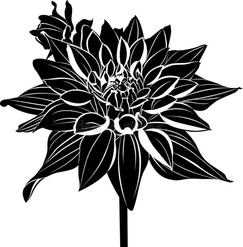 dahlias. Vintage elegant flowers vector illustration