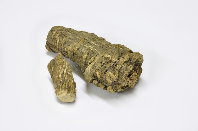 Dahurian angelica root. Is a key ingredient in herbal salts of Thailand royalty free stock images