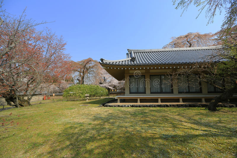 Daigoji het Bloeien Cherry Tree royalty-vrije stock foto's