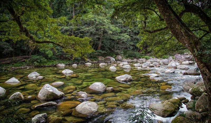 Daintree Nationaal Park, Australi? stock afbeelding