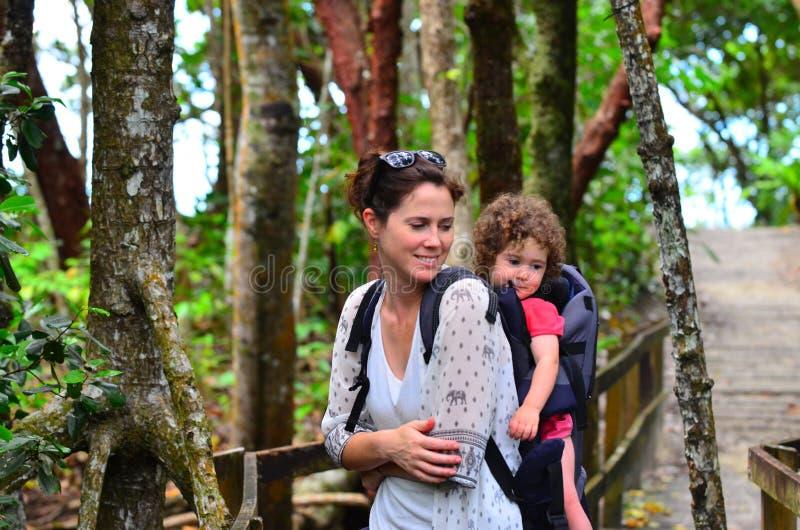 Daintree Nationaal Park Queensland Australië stock foto's