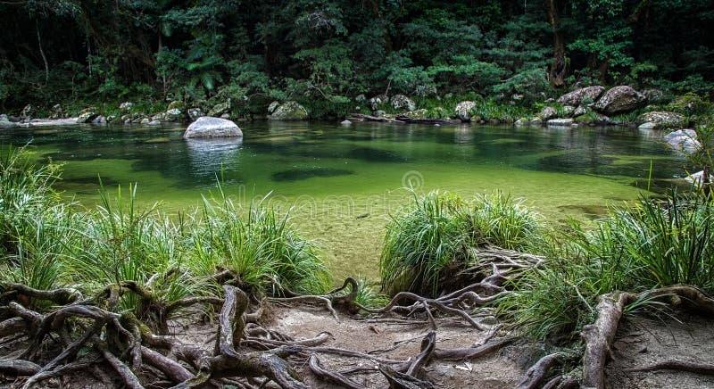 Daintree park narodowy, Australia zdjęcia royalty free