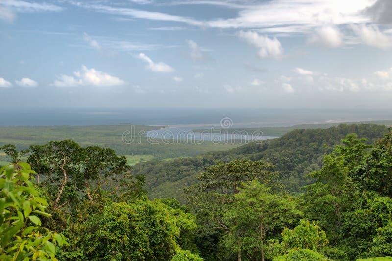 daintree park narodowy podróżowanie fotografia royalty free