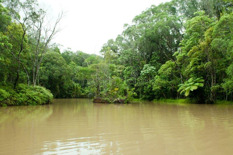 Daintree Rainforest och sjö nära Cairnes, grön djungel, Queensland, Australien royaltyfri foto