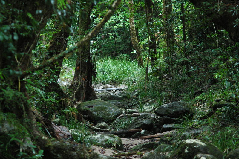 Daintree tropikalny las deszczowy fotografia royalty free