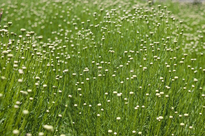 Dainty Wildflower and Grass Field royalty free stock photo