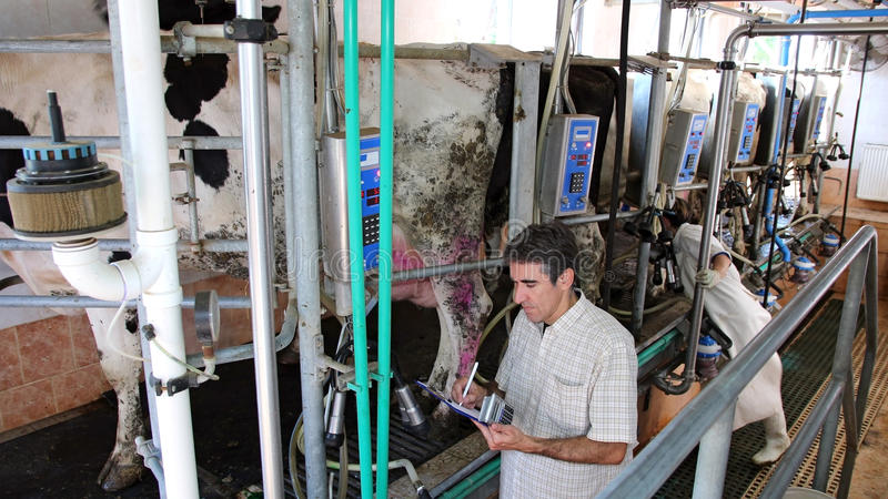 Dairy Business Management Royalty Free Stock Images