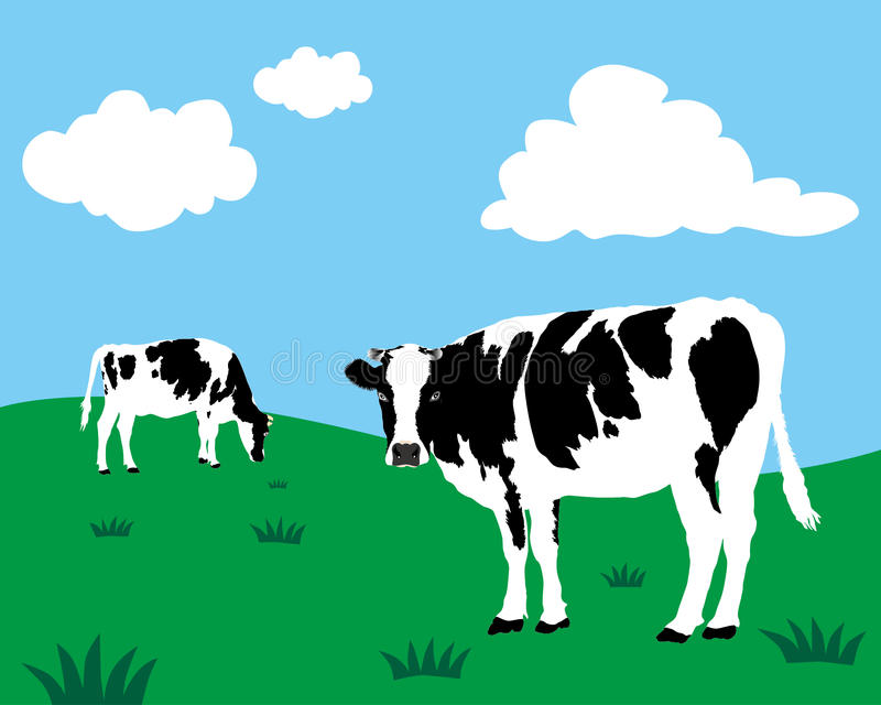 Dairy cattle. Vector of dairy cattle in grassland royalty free illustration