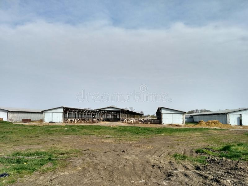 Dairy farm. Cowhouse, cowshed, barn, byre royalty free stock photography
