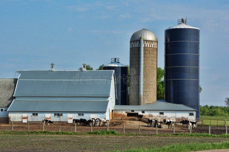 Dairy Farm 4 royalty free stock image
