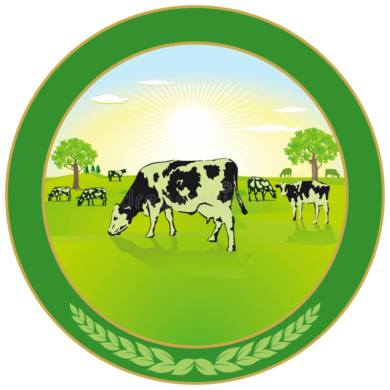 Dairy farming label. With a herd of cows grazing in a green field in summer vector illustration