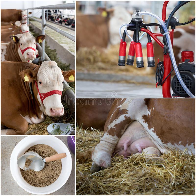 Dairy industry collage stock images
