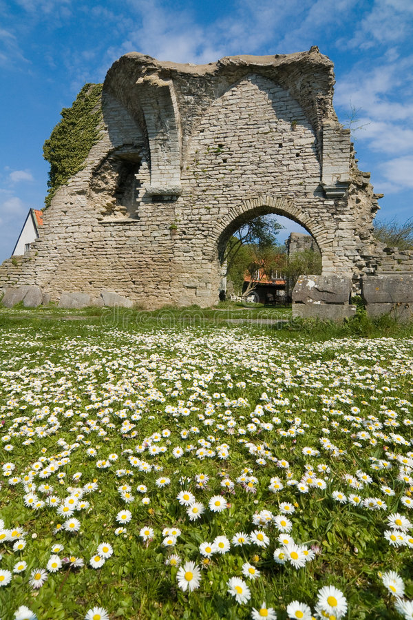 Daises and Ruins royalty free stock photo