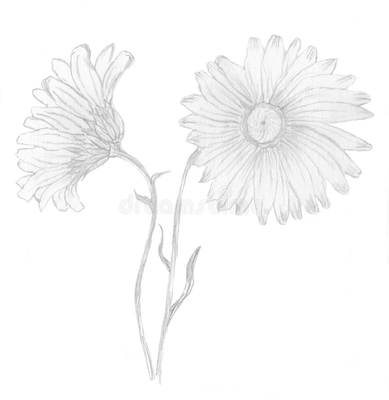 Download Daisies stock illustration. Image of fill, happy, smile - 14566413