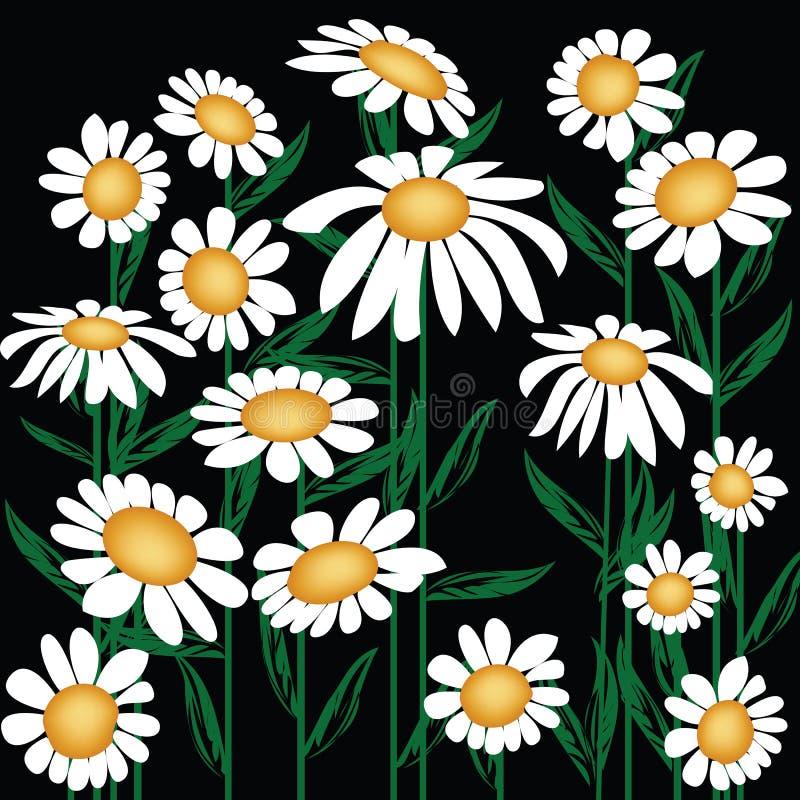 Download Daisies stock illustration. Illustration of card, illustration - 15204490
