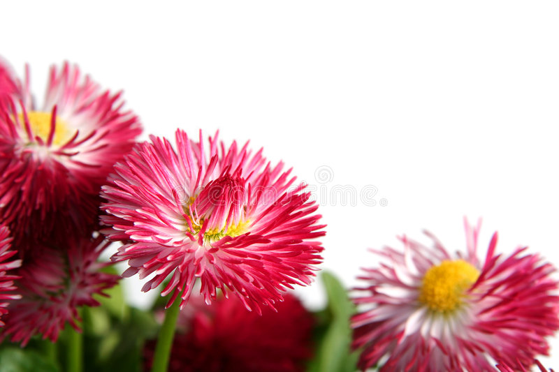 Download Daisies Stock Images - Image: 2320764