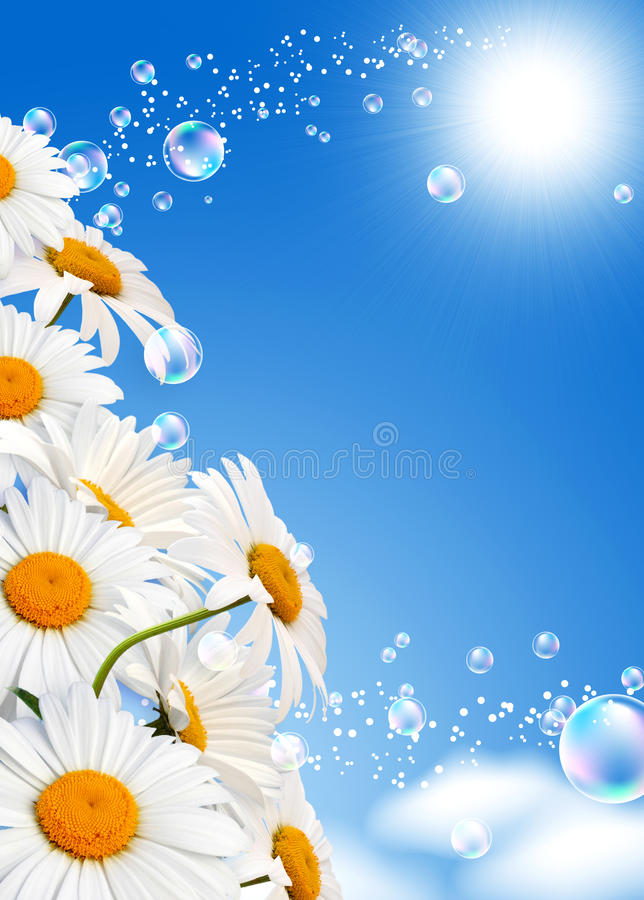 Daisies Against The Sky Stock Photography