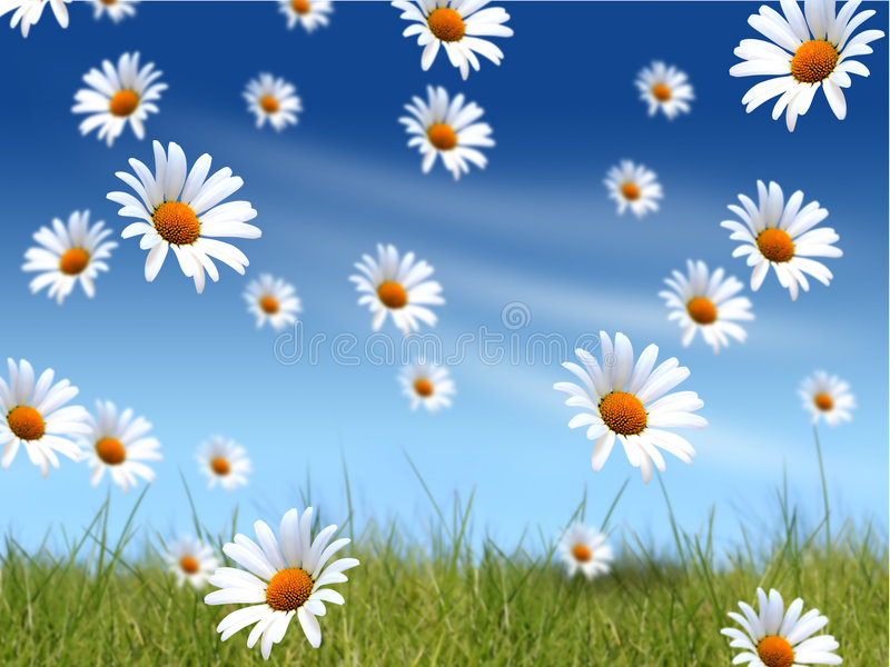 Daisies background royalty free stock images