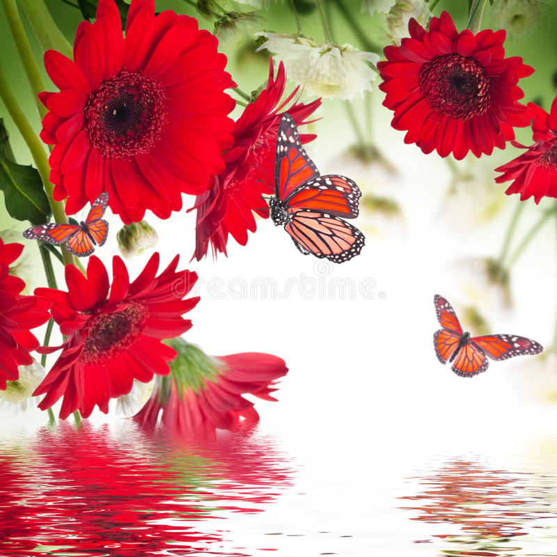 Daisies and butterfly stock photo