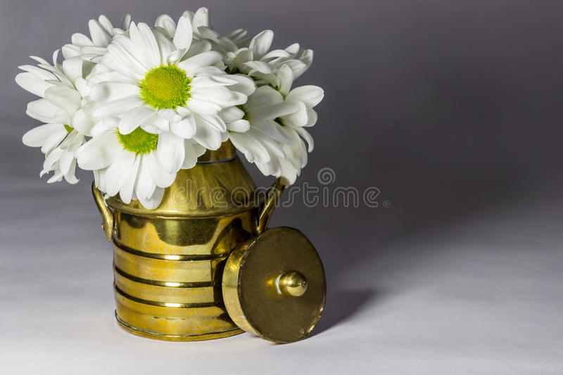 Daisies in a copper Milk can royalty free stock image