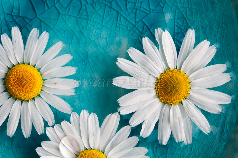 Daisies floating in water royalty free stock photography