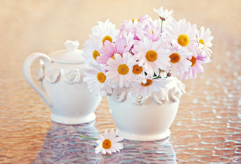 Daisies flowers stock image