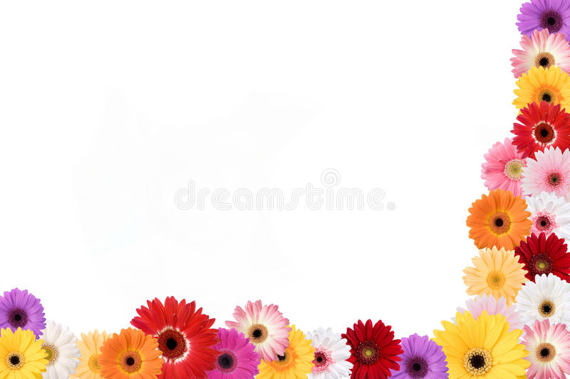 Daisies Frame. A colorful frame on daisies surrounds a white background royalty free stock photography
