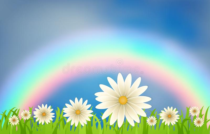 Daisies on a lawn against a rainbow and a blue sky with clouds. A composition of daisy flowers on a background of green grass vector illustration