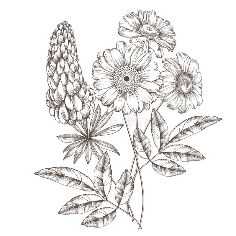 Daisies And Lupin Stock Illustration Illustration Of Collection 66829307