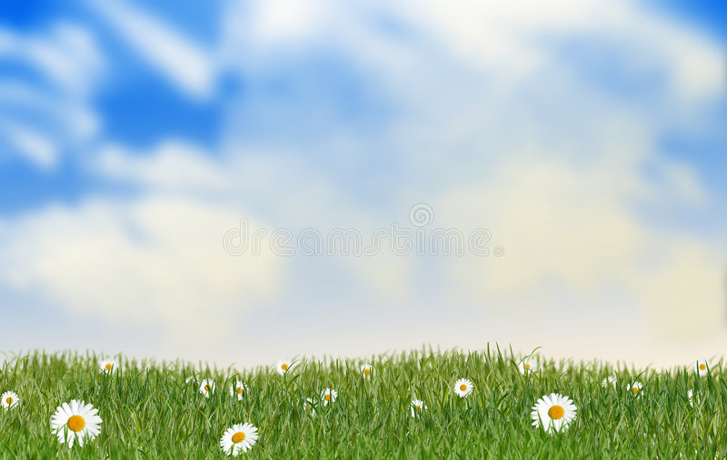 Download Daisies meadow stock image. Image of daisies, green, season - 8084605