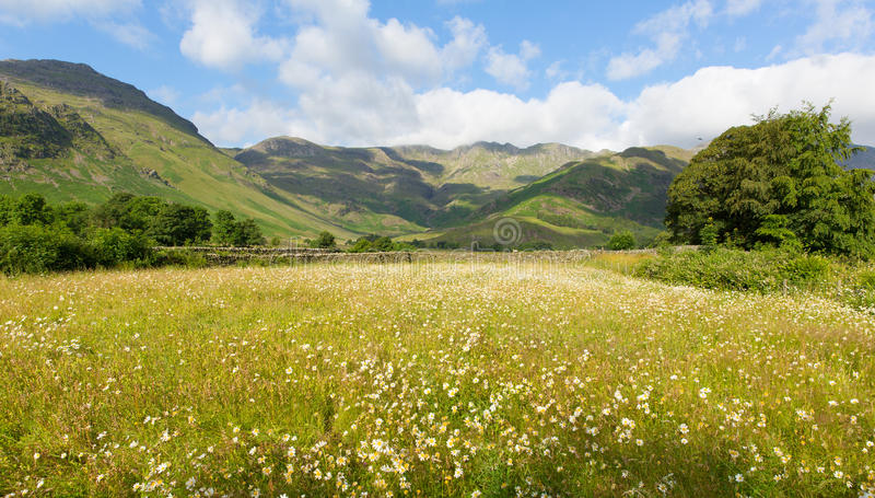 Daisies mountains blue sky and clouds scenic Langdale Valley Lake District uk. Daisy field with mountains blue sky and clouds scenic Langdale Valley Lake stock photos