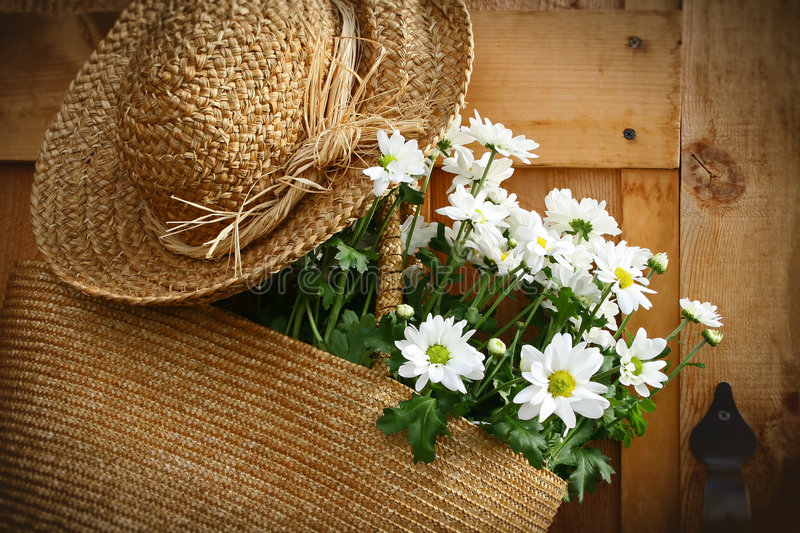 Daisies in summer purse/ dark edges. Freshly picked daisies hanging in a summer purse with old summer hat royalty free stock photos