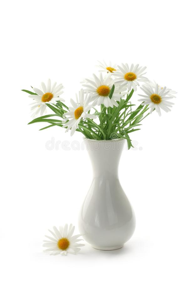 Download Daisies in vase stock photo. Image of leaf, vase, plant - 18960204