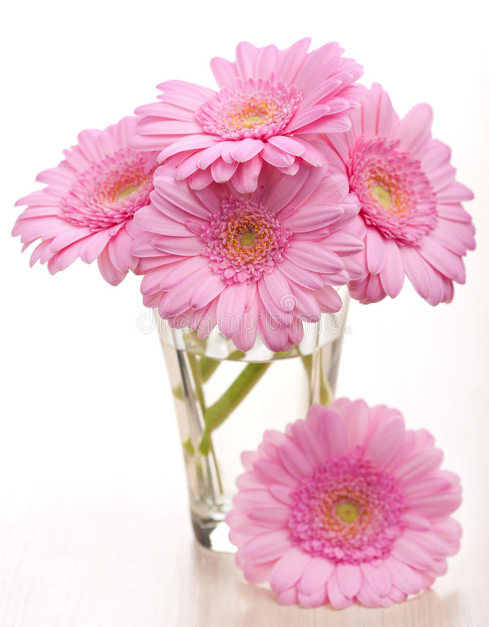 Daisies in vase royalty free stock images