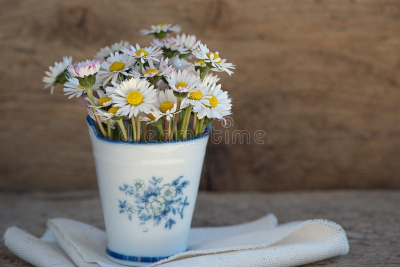 Daisies in vase royalty free stock photos