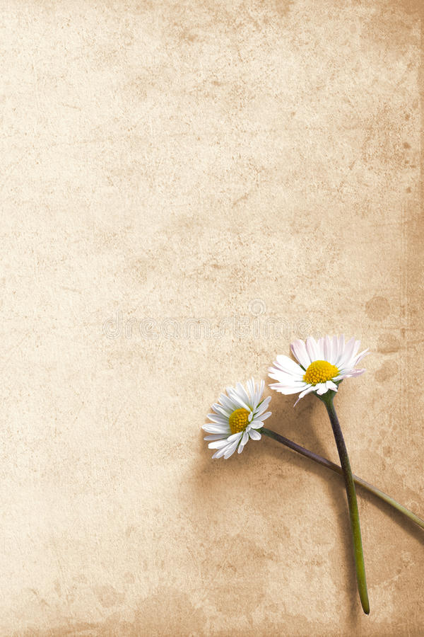 Daisies on vintage background stock photos