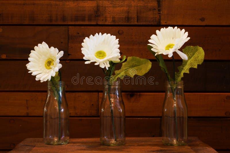 Daisies on Wood Paneled Background. Three White Daisies on Horizontal antique wood paneled background stock image