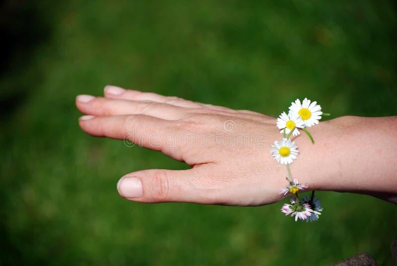 daisy łańcuszkowa bransoletki zdjęcie stock