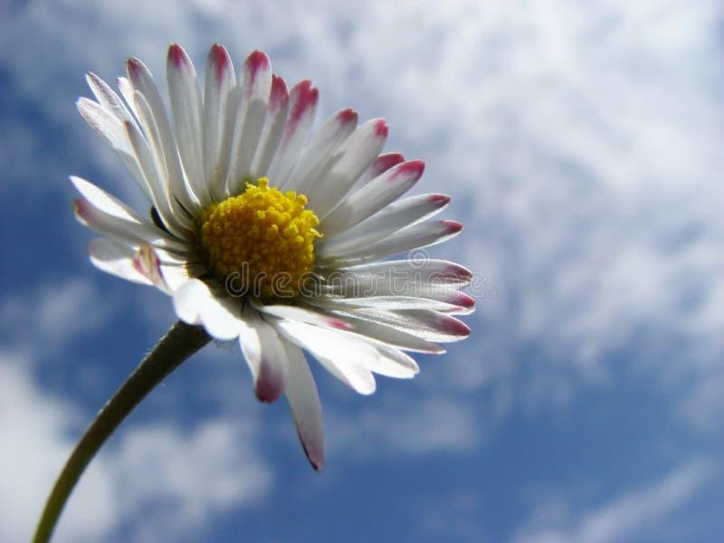 Download Daisy stock image. Image of closeup, cloud, macro, soft - 14195