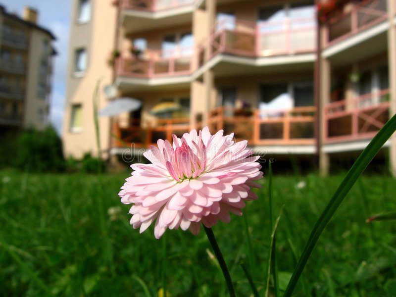 Download Daisy stock image. Image of blissful, idyllic, floral - 2007491