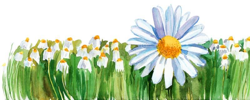 Download Daisy stock illustration. Image of illustration, landscaped - 26198953